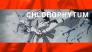 01-KOD-23-Chlorophytum