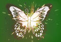 Butterfly Flare Store Icon 001.jpg