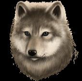 Волчата (квест)
