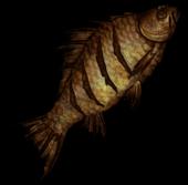 Жареная рыба(нет фона)