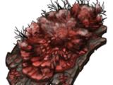 Кровавая плесень