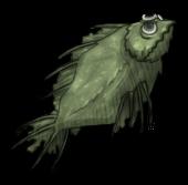 Свежая рыба (старая)