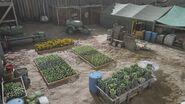 Wizard island hydroponics