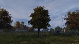 Plumtree.png