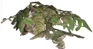 PlantMaterial.png