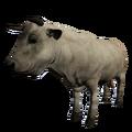 Bull White.png