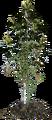 CannabisPlant Leaked1.png