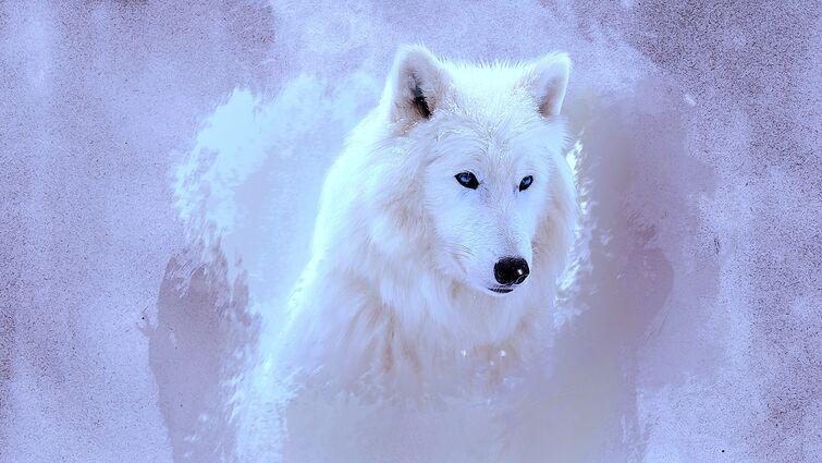 Волк Фенго