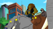 5859237-lion-mane23
