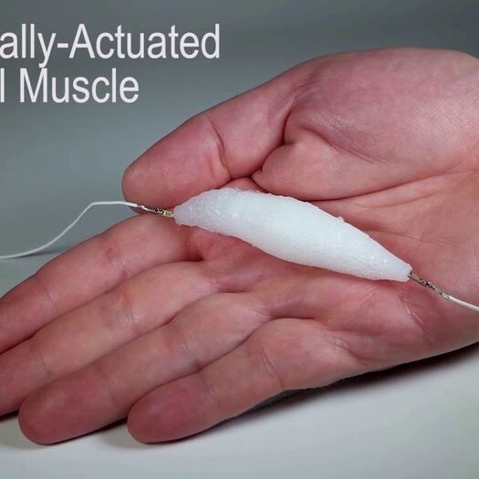 Synthetic muscle could lead to lifelike robots