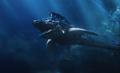 Orm on Shark