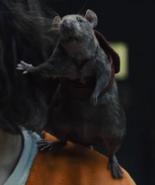 Sebastian on Ratcatcher 2's shoulder