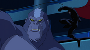 Batman vs Silverback BUAI