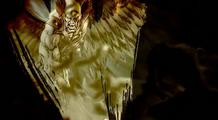 HawkmanBrainiacForces