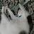 ShyLilShadow's avatar