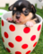 Adoptmeisgood's avatar