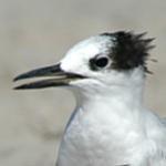 Sheyffer's avatar