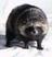 Weirdweirdweirdo's avatar