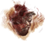 Dbd-journal-heartbeat.png