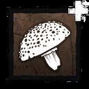 Amanita Toxin