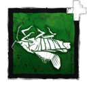 Dried Cicada