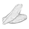 IconAddon dragonflyWings.png