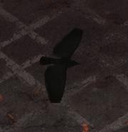 Crow 3D