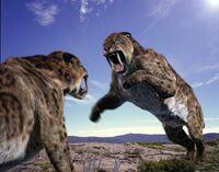Amazing fun ecology Smilodon Sabre Tooth Cat 2009072322083911101