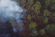 Rainforest-fire-frame.jpg