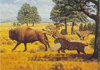 Bison vs smilodon
