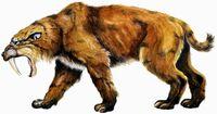 Sabertooth smilodon