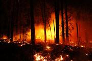 Australia-wildfires.jpg