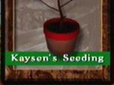 Kaysen's Seeding