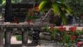 DOA5LR - Zack island3 - screen by AdamCray and AgnessAngel