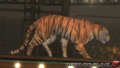 DOA5LR - The Tiger Show - screen by AdamCray and AgnessAngel