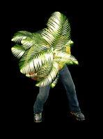 Dead rising small fern tree (1)