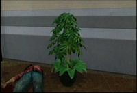 Dead rising plant