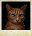 Character Cat Smokey.png