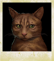 Character Cat Samm.png