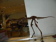Ornitomimus