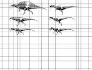 Theropod size