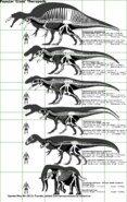 Popular Giant Theropods