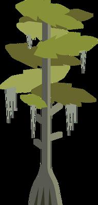 Bald Cypress.png
