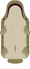 Alligator Gar.png