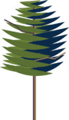 Scots Pine.png