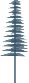 Pine Silhouette.png