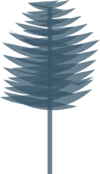 Scots Pine Silhouette.png