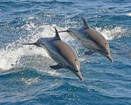 Dolphins-mammals-fish-water