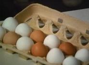 Eggbert1.01