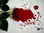 Love by LadybirdM